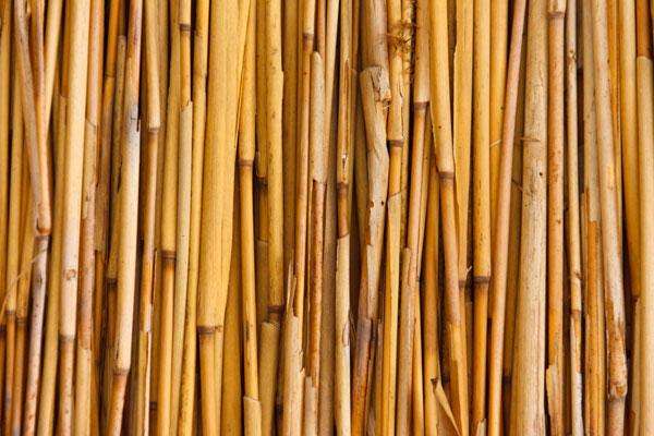 Bundle of bamboo