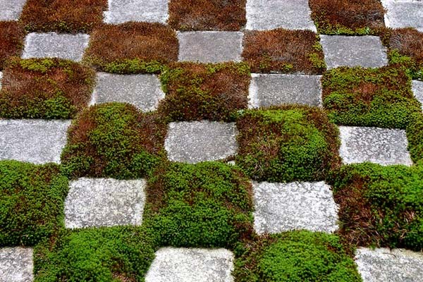 pavers in grass