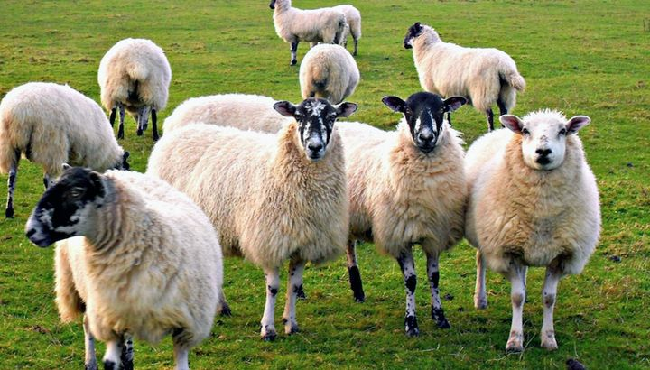 Counting Sheep? Here's 6 Weird Snooze-Related Facts to Read Before You Sleep