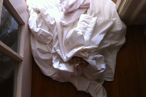 Cat in dirty sheets