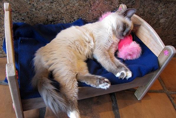 amerisleep pet in bed