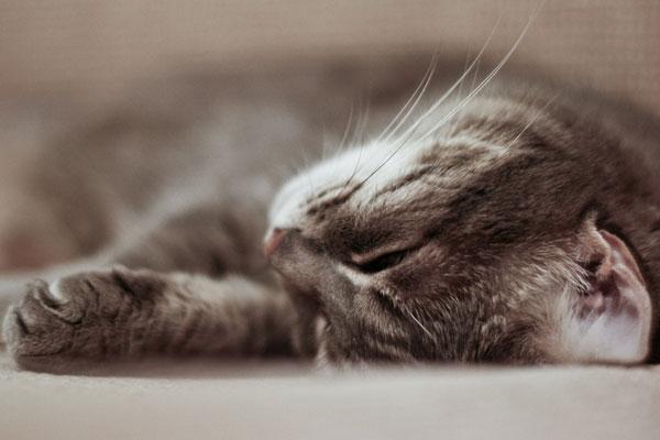 Cap nap