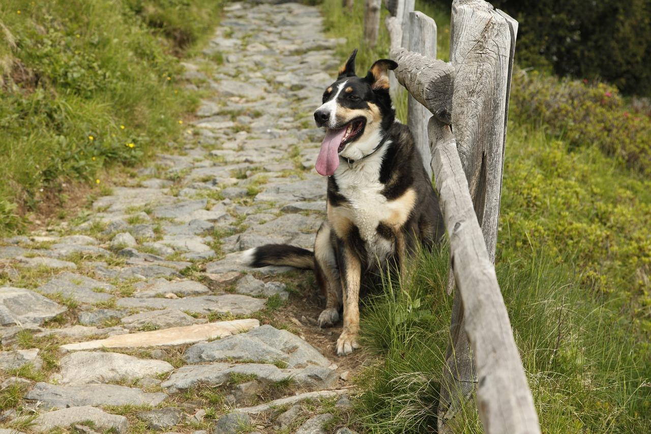 walking-dog-exercise