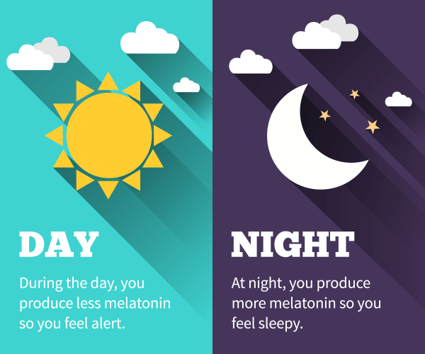 During the day, you produce less melatonin so you feel alert. At night, you produce more melatonin so you feel sleepy.